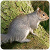 Squirrel Control Shrayhill